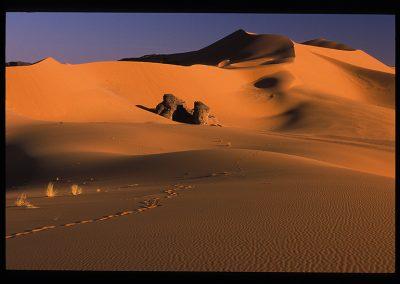 18-23-dune