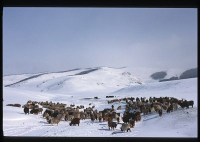 40-08-ovorhangai steppe