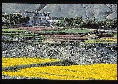 Lo Manthang paysage-247