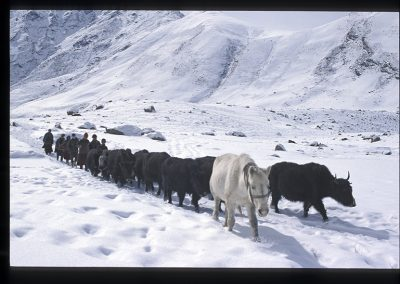 Raru yaks-166