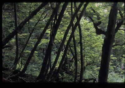 02-05-Ushuaia