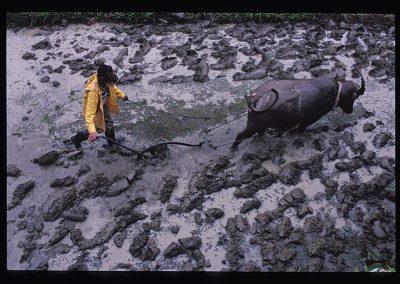 07-24-batad bufalo