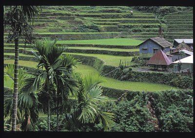 12-13-bangaan riziere