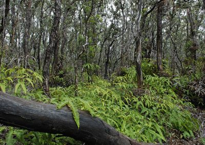1284-Big vegetation