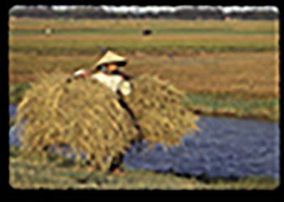 b01-Danang rizieres
