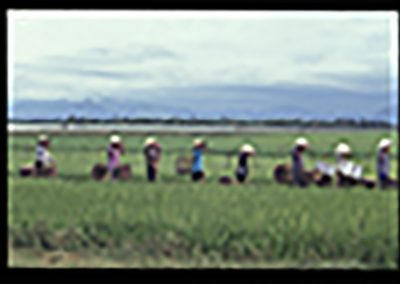 b88-Hue riviere riziere