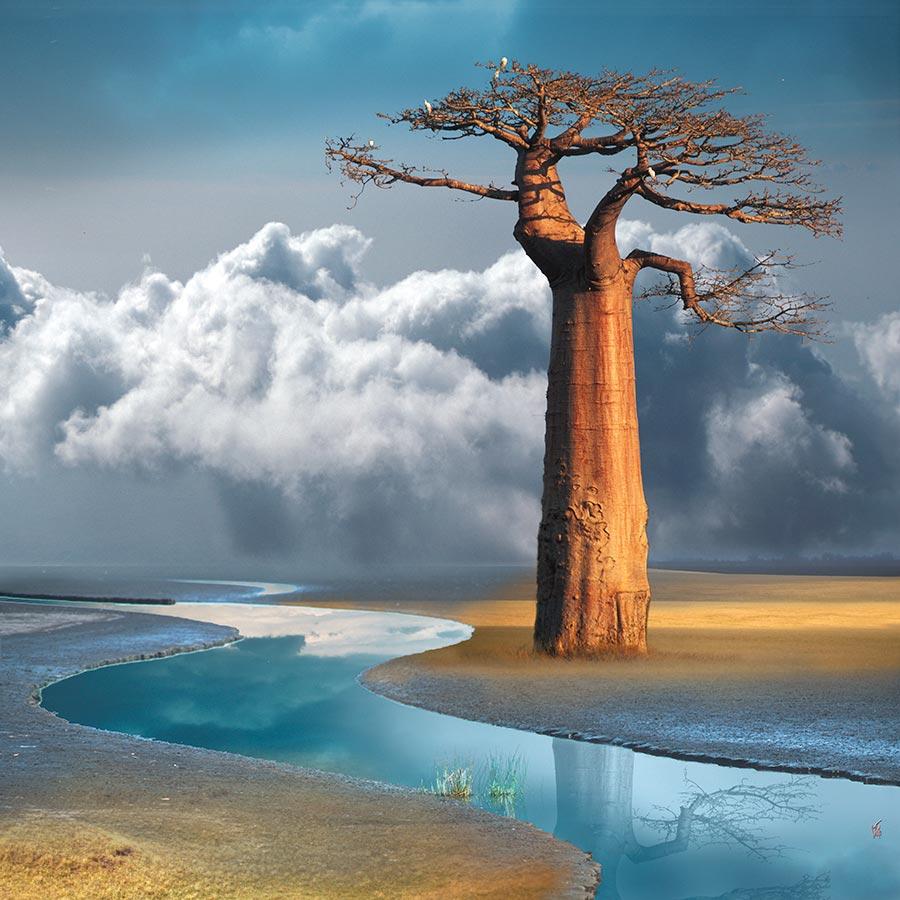Natron-baobab-03